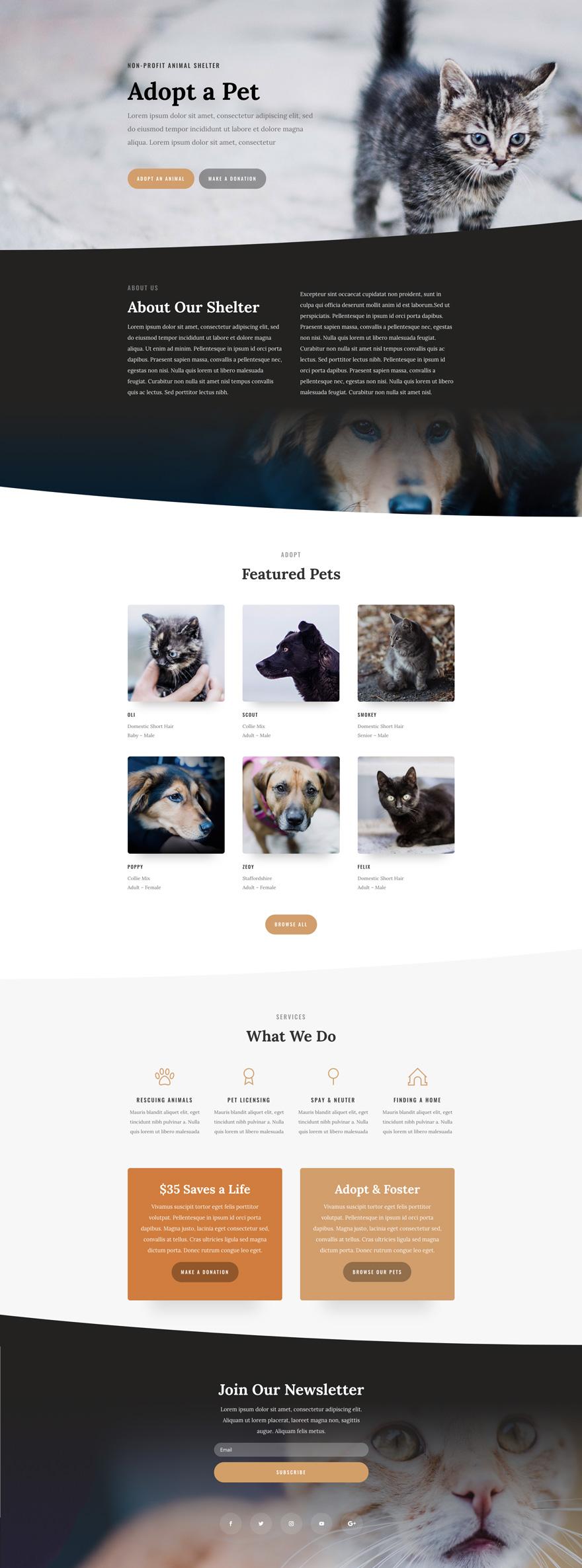 Animal Shelter Pre-made WordPress Website Design