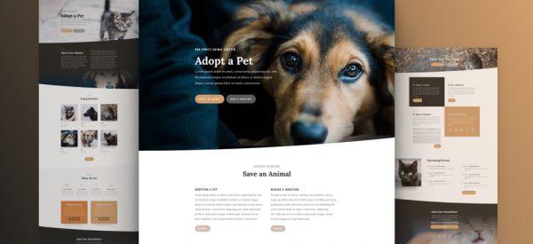Animal Shelter Pre-made Divi WordPress Website Design